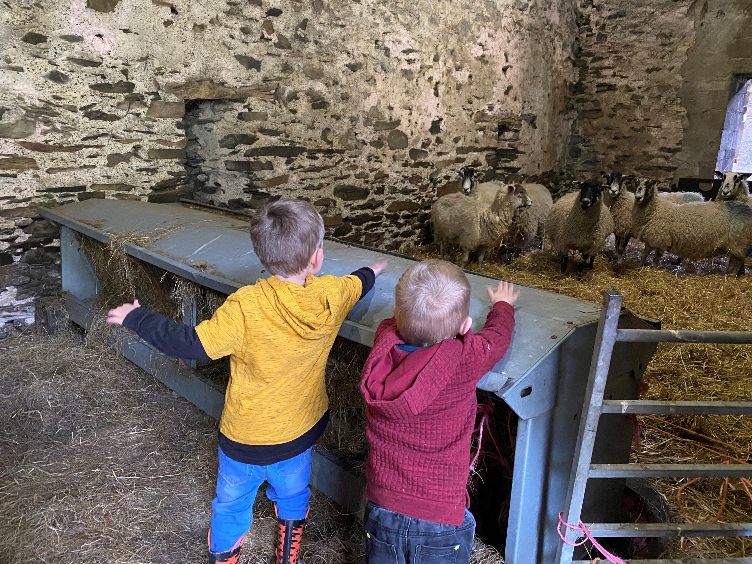 2 boys in the farm pointing at sheep